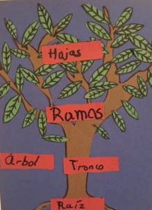 Las partes básicas de un árbol